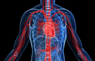 طرق لتنشيط الدورة الدموية بالجسم