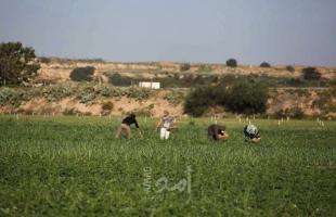 غزة: اتحاد المزارعين يُعلن البدء بفعاليات احتجاجية ميدانيةلتحقيق مطالبهم
