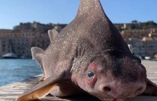 ظهور مخلوق مرعب في البحر المتوسط