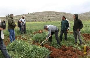 نابلس: مستوطنون يزرعون الكرمة في أراضي المواطنين