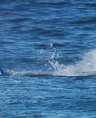 متى قتل سمك القرش أول إنسان؟.. دراسة تكشف الزمان