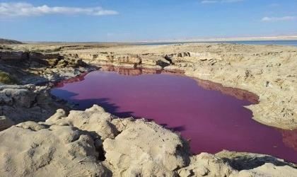 بركة مياه في البحر الميت تتحول إلى الوردي والسبب..