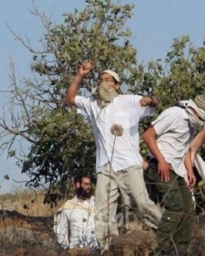 مستوطنون يعتدون على المواطنين ويمنعونهم من الوصول الى أراضيهم جنوب الخليل